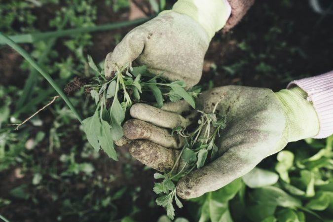 Que faire des feuilles mortes dans son jardin