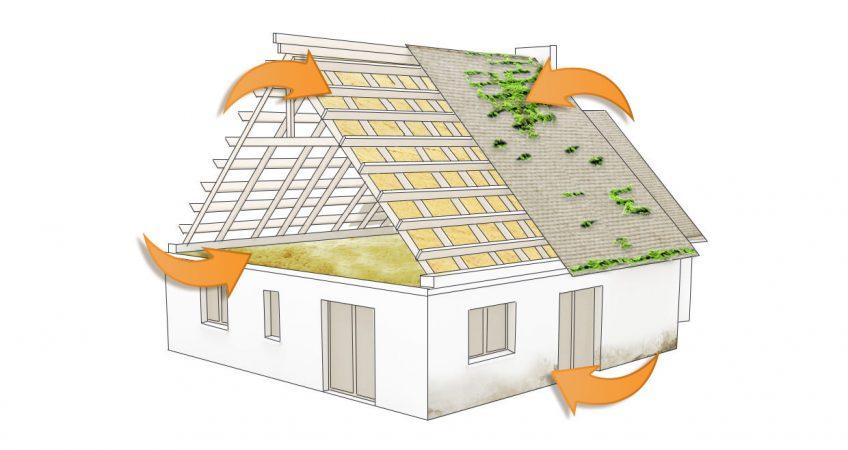 entretien et démoussage de toiture